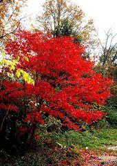Leuchtende Farben des Herbstes