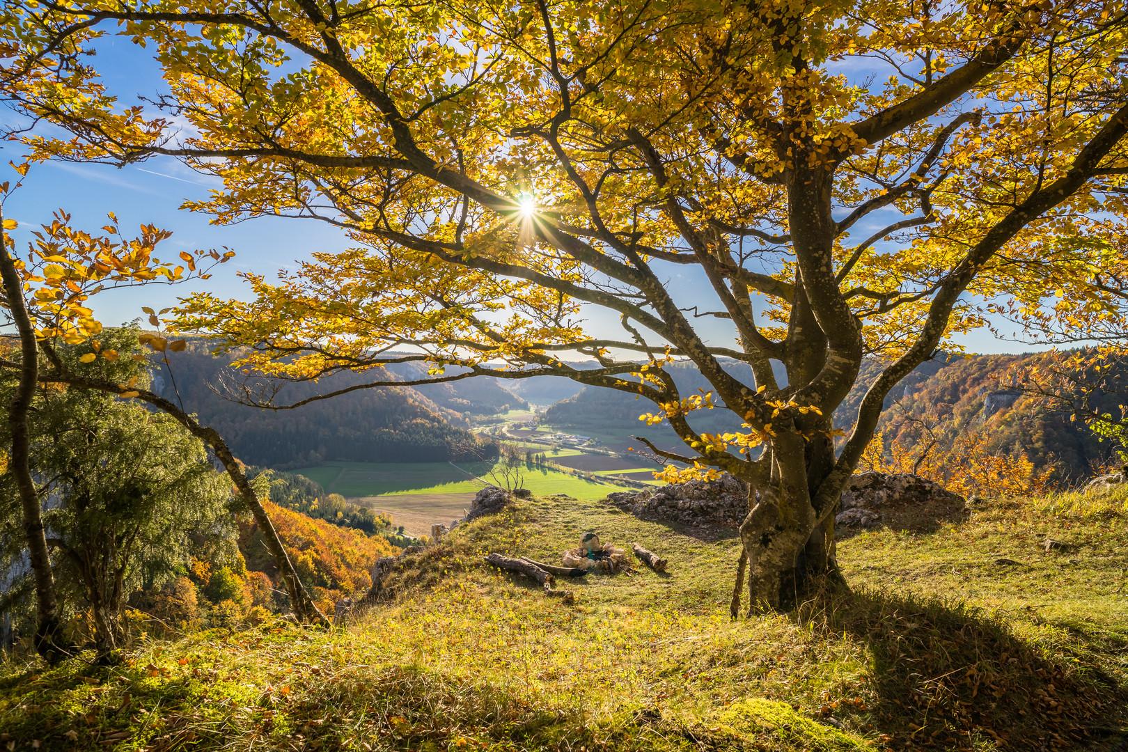 Leuchtende Herbstpracht