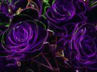Leuchtende Rosen