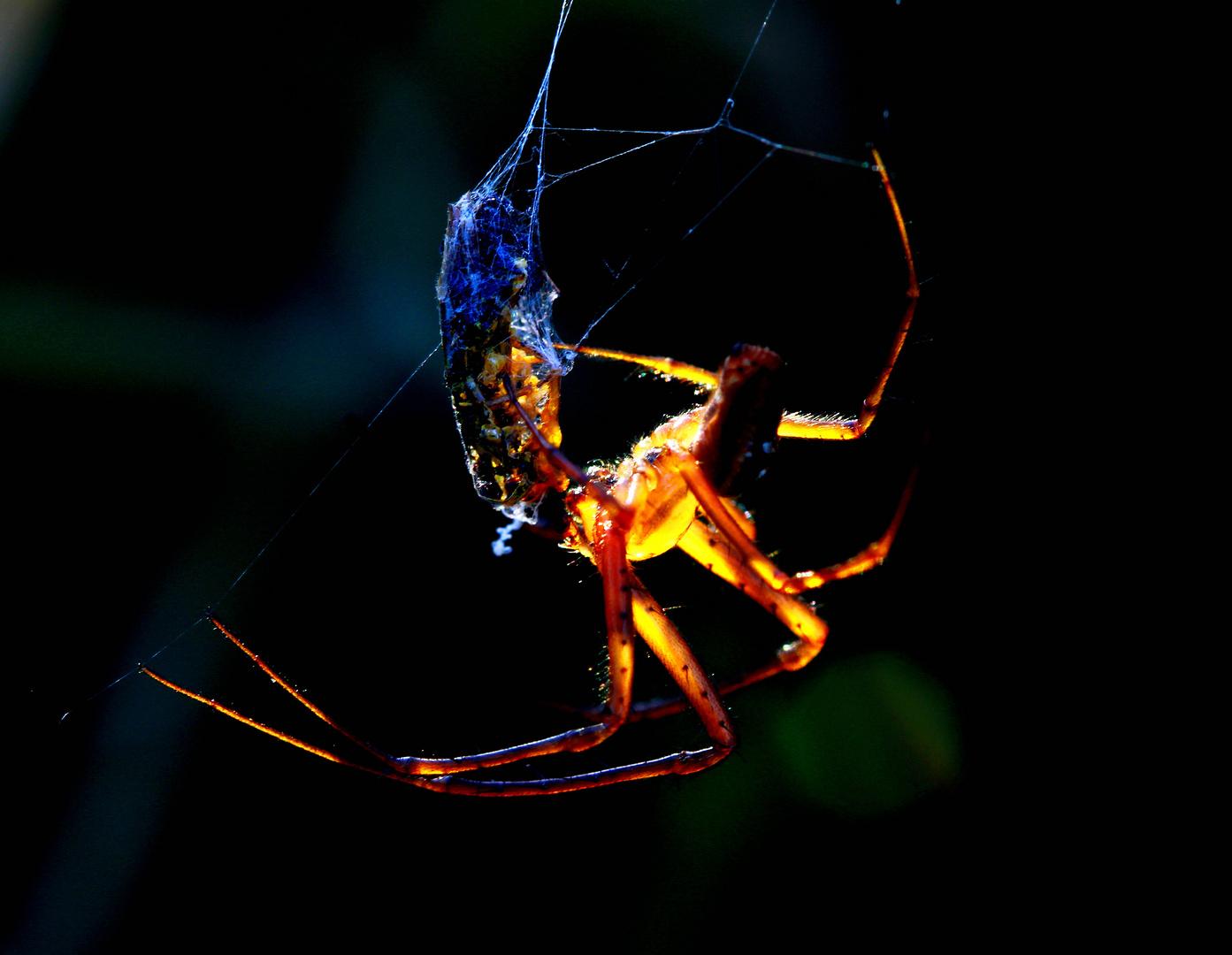 leuchtende Spinne
