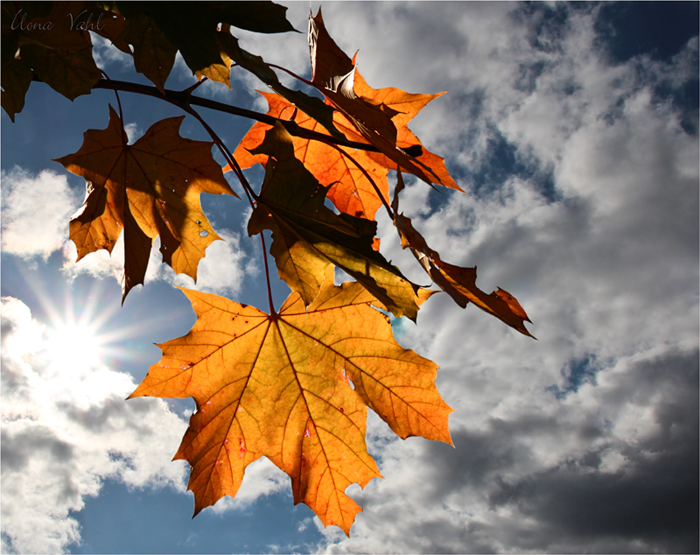 Leuchtender Herbst