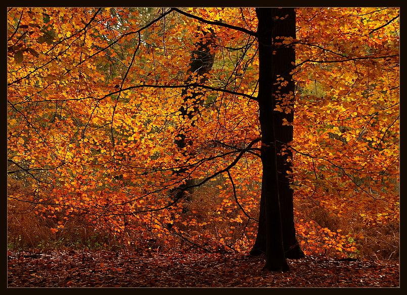 Leuchtender Herbst .........