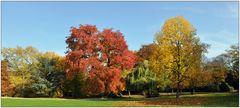 Leuchtender Herbst im Florapark