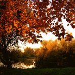 Leuchtender Herbstmorgen ...