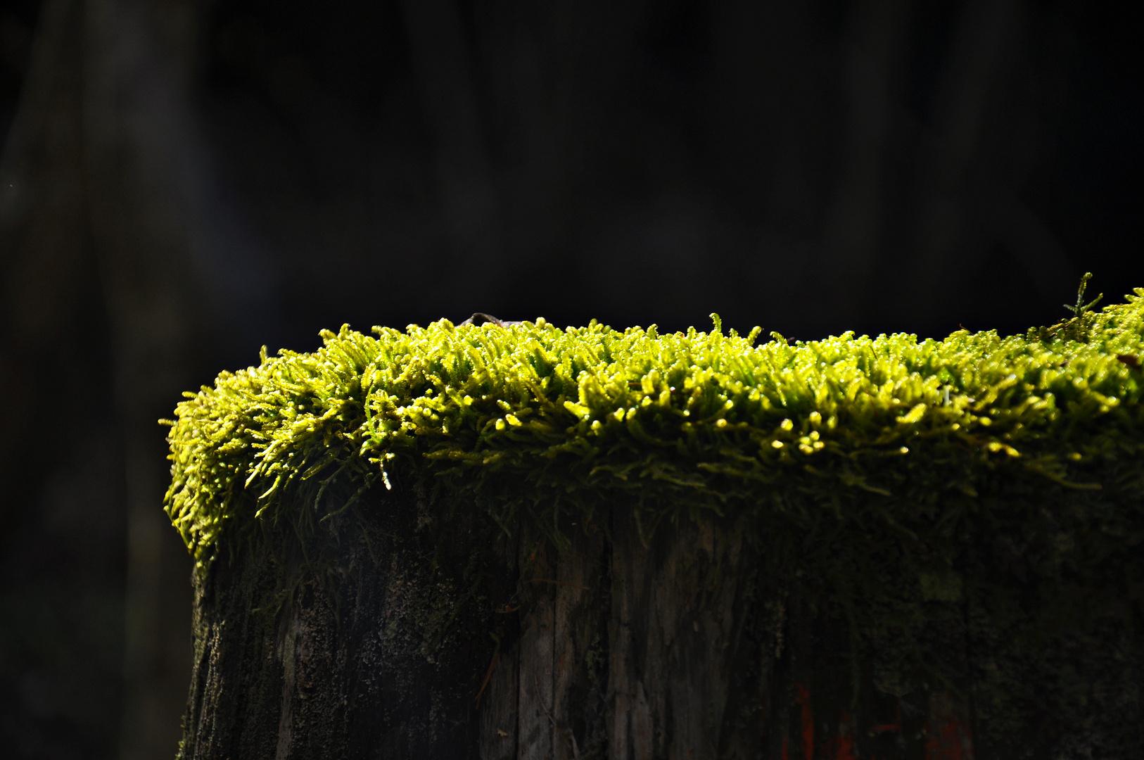 leuchtender Teppich im Wald