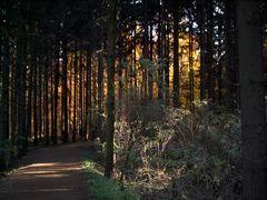 ...leuchtender Wald