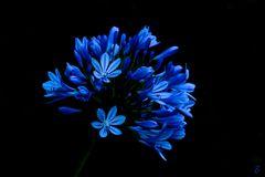 Leuchtendes Blau