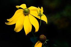 - leuchtendes Gelb -