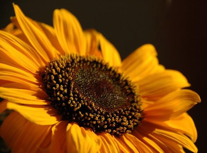 ...leuchtendes gelb...