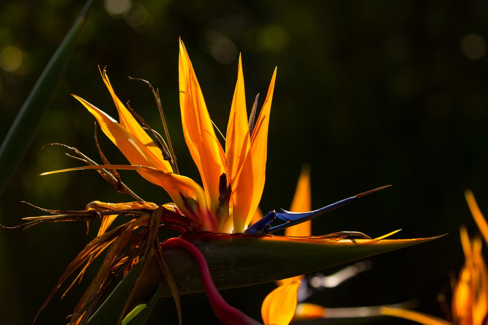 Leuchtfeuer - die etwas anderen Herbstfarben