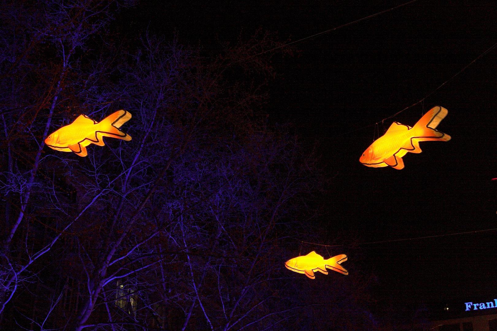 Leuchtfische