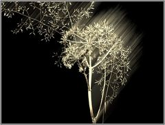Leuchtgras