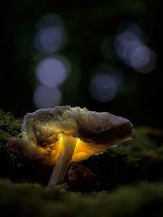 Leuchtpilz