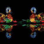 Leuchtschwäne
