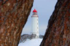Leuchttum Dornbusch im Winter