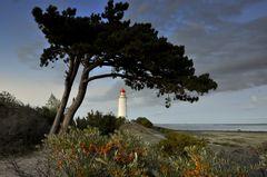 Leuchtturm Dornbusch am Abend 18