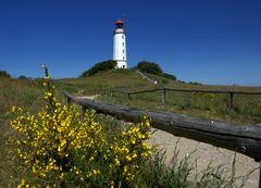 Leuchtturm Dornbusch mit Ginster