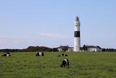 Leuchtturm Kühe