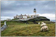 Leuchtturm mit Schafen