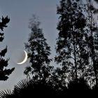 Lever de lune vu de ma terrasse  --  Mondaufgang von meiner Terrasse aus gesehen