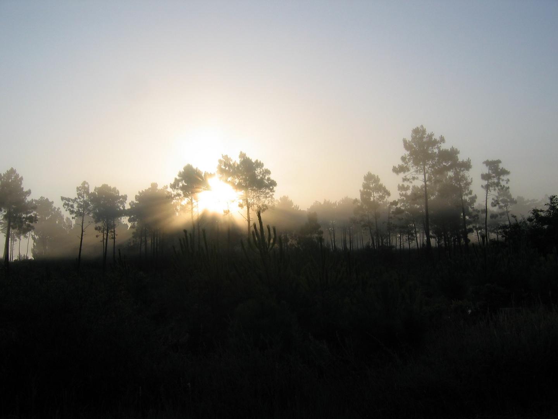 lever de soleil à travers les arbres