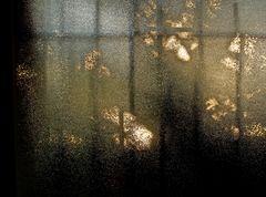 Lever de soleil derrière les arbres et un verre cathédrale