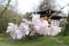 Leverkusen - Im Japanischen Garten
