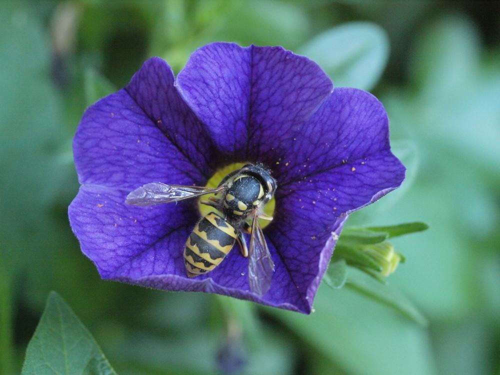 Leverkusener Biene