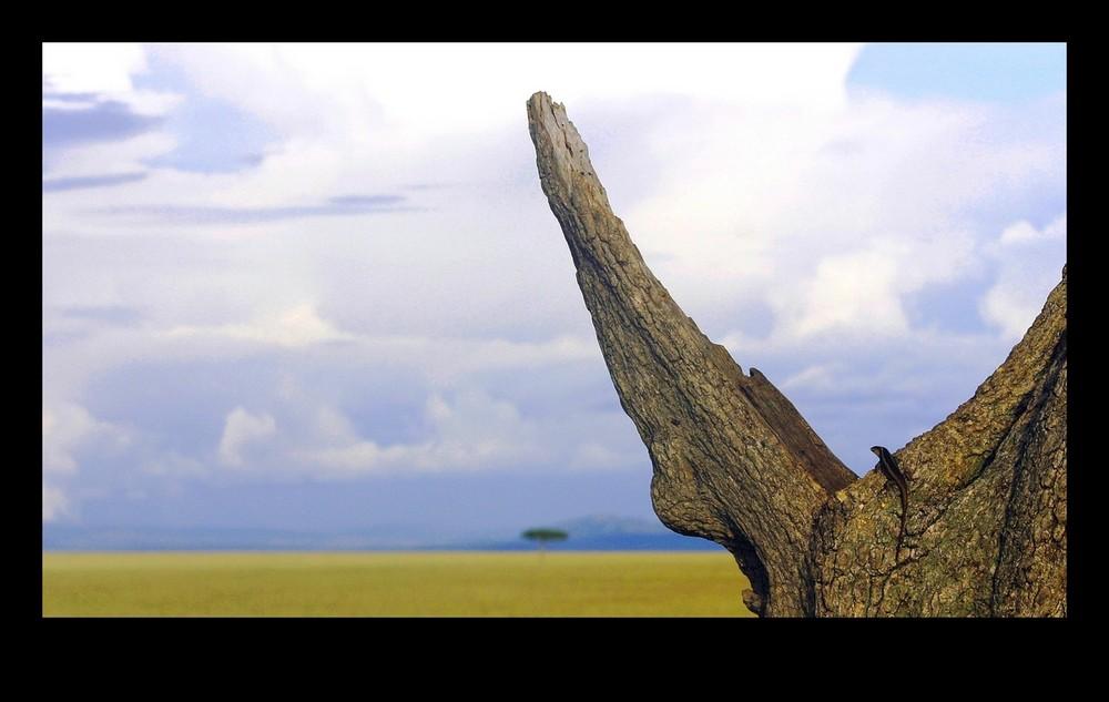 Lézard - Masai Mara / Kenya - Le voyage sera long ...
