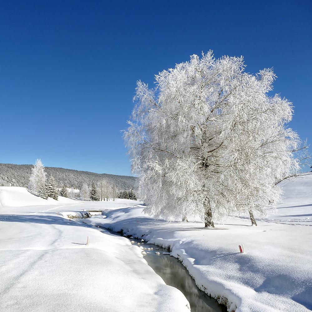 L'hiver au carré............