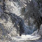 """"""" L'hiver en forêt """""""