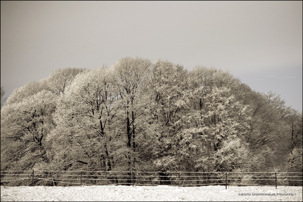 l'hiver est bien arrivé....