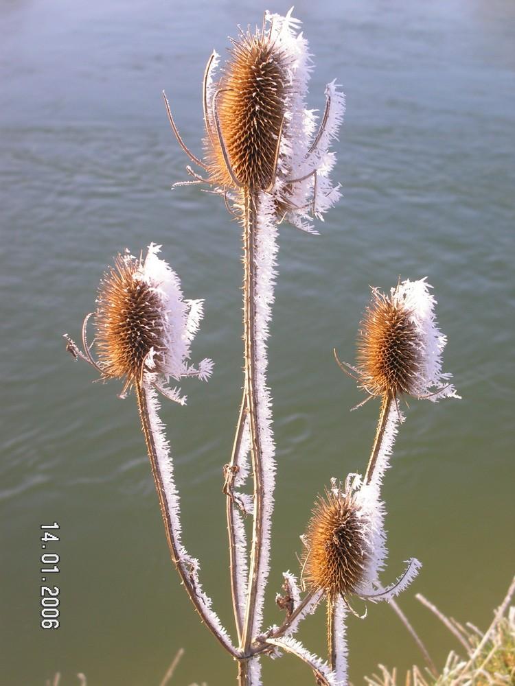 l'hiver, quelle beauté!!