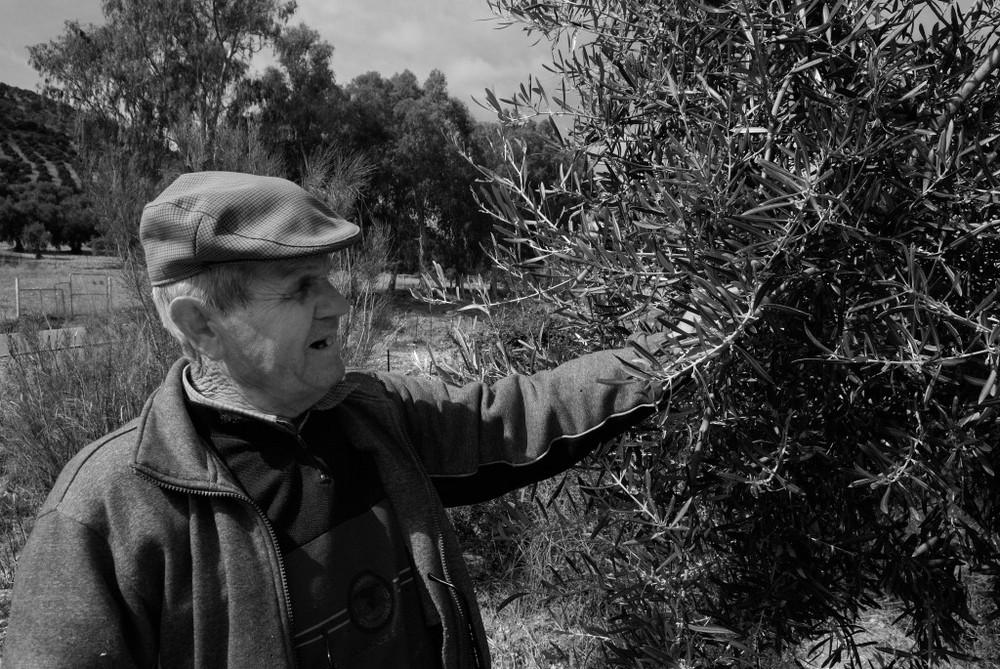L'homme aux oliviers