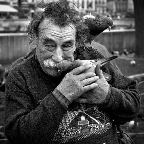 l'homme aux pigeons