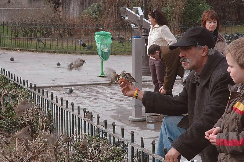 L'homme et les moineaus de Paris
