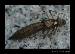 Libelle-1