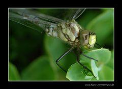 Libelle-3