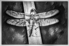 Libelle als Gemälde und in s/w