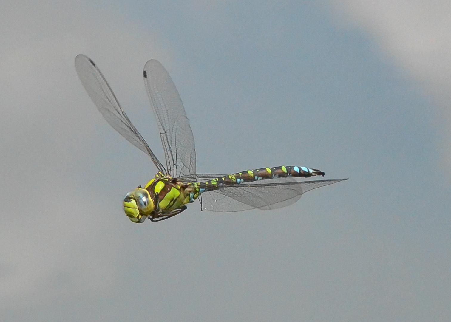 Libelle am Himmel