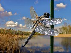 Libelle am See
