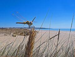 Libelle beim Strandurlaub