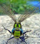 """Libelle - """"Großlibellenflügel"""""""