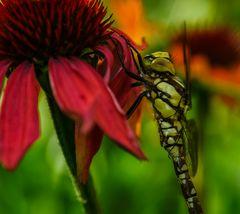 Libelle I