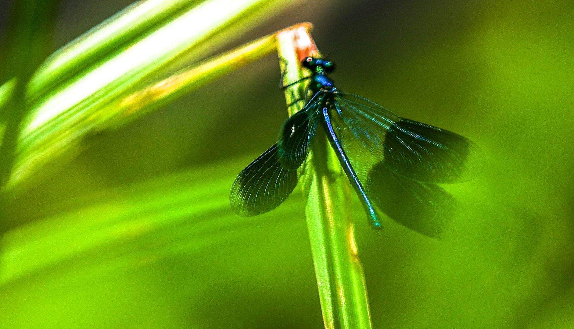 Libelle im Abflug
