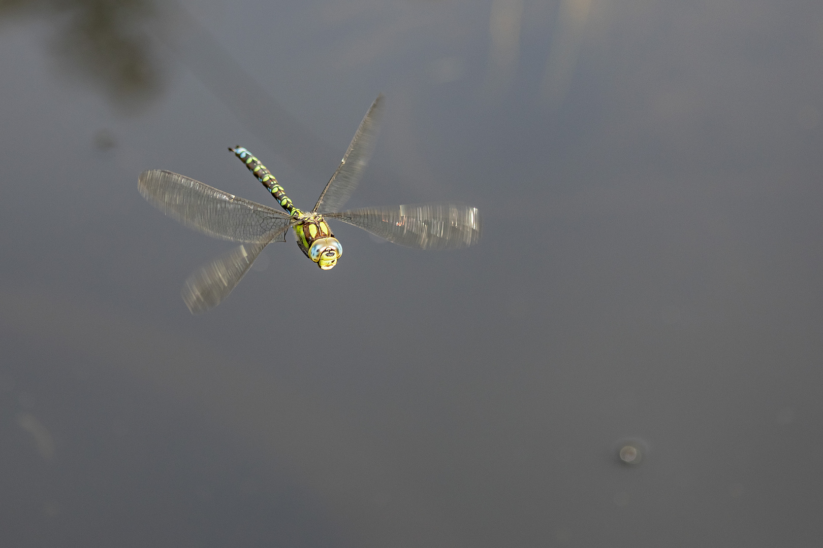 Libelle im Anflug-24Sep2020