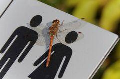 Libelle im Botanischen Garten