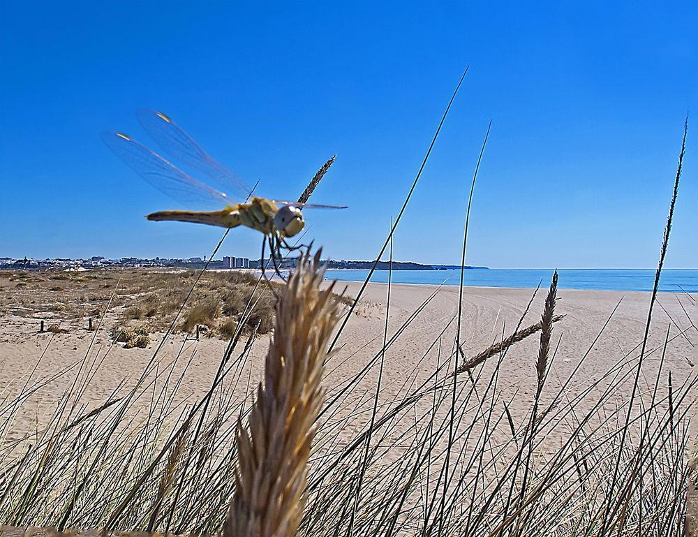Libelle im Strandurlaub