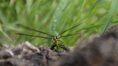 libelle ohne gewähr
