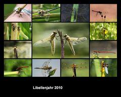 Libellen aus 2010